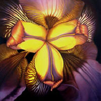 Goldies Iris by Anni Adkins
