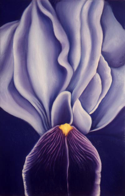Purple Iris - Flower Paintings by Anni Adkins
